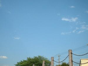 0509noyanasegawa_040
